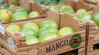 nossas-frutas-podem-ir-mais-longe